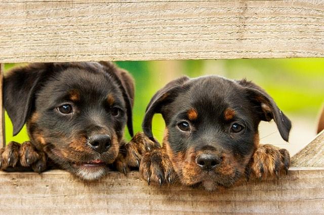 Barf Hundefutter für Welpen
